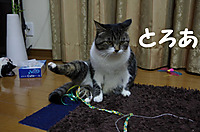 2012_01_26_1798_edited1