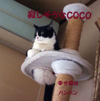 2012_02_16_2219_edited1_3