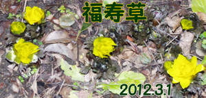2012_03_01_2495_edited1