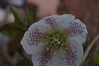 2012_04_06_3618_edited1