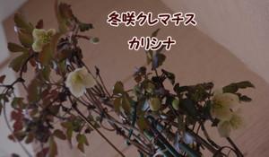 2012_04_11_3725_edited1