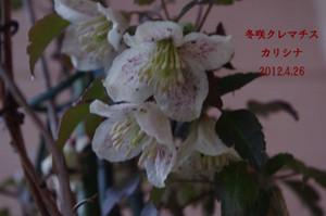 2012_04_26_4094_edited1