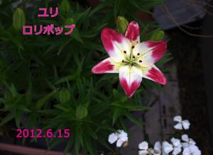 2012_06_15_5368_edited1