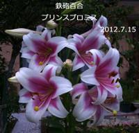 2012_07_15_6179_edited1_edited1