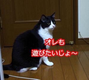2012_07_19_6339_edited1