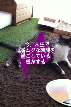 2012_08_04_6805