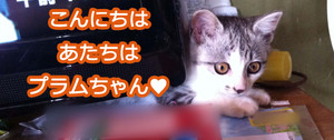 2012_08_05_6924_edited1