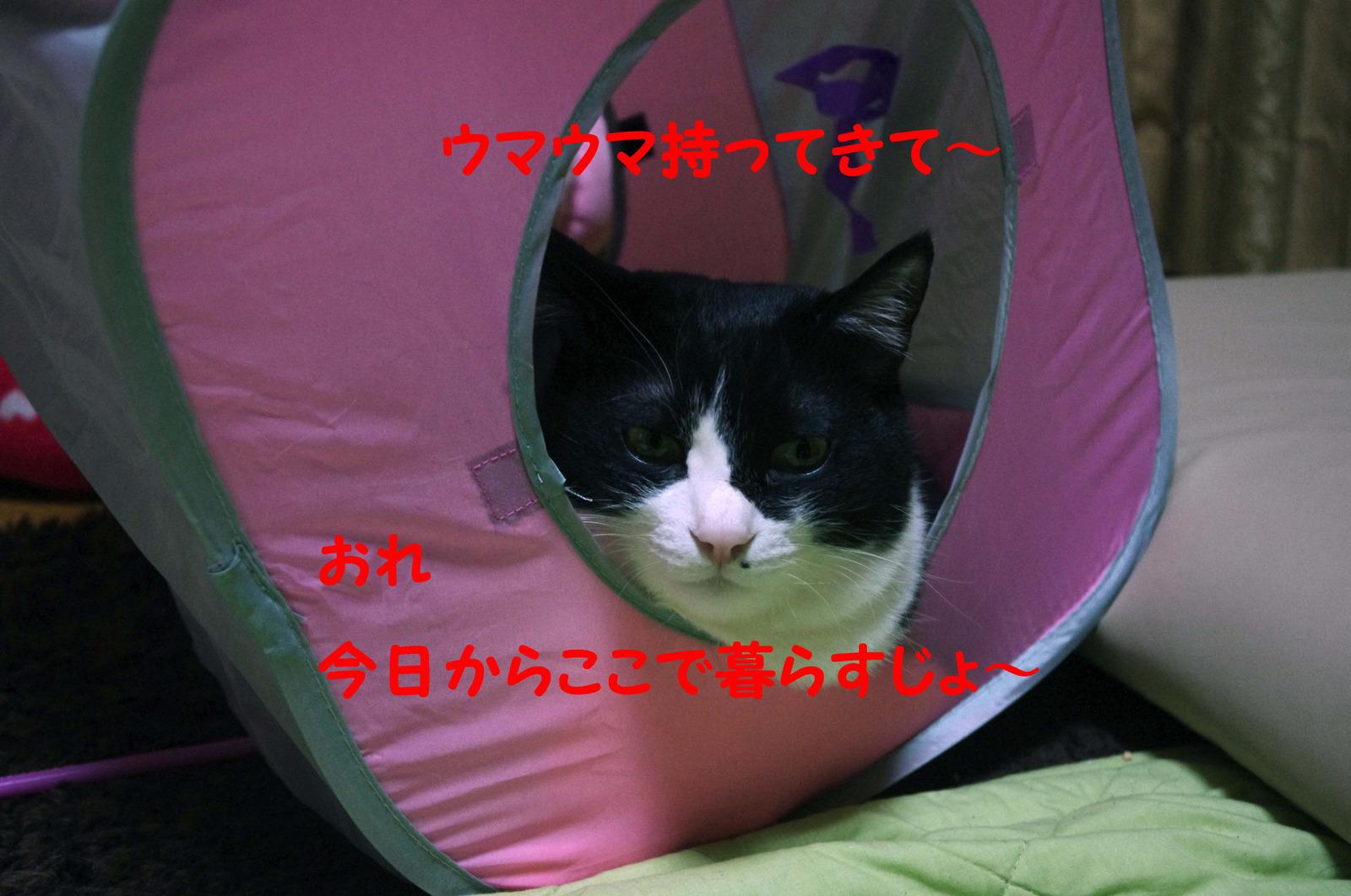 2012_01_14_1501_edited1_2