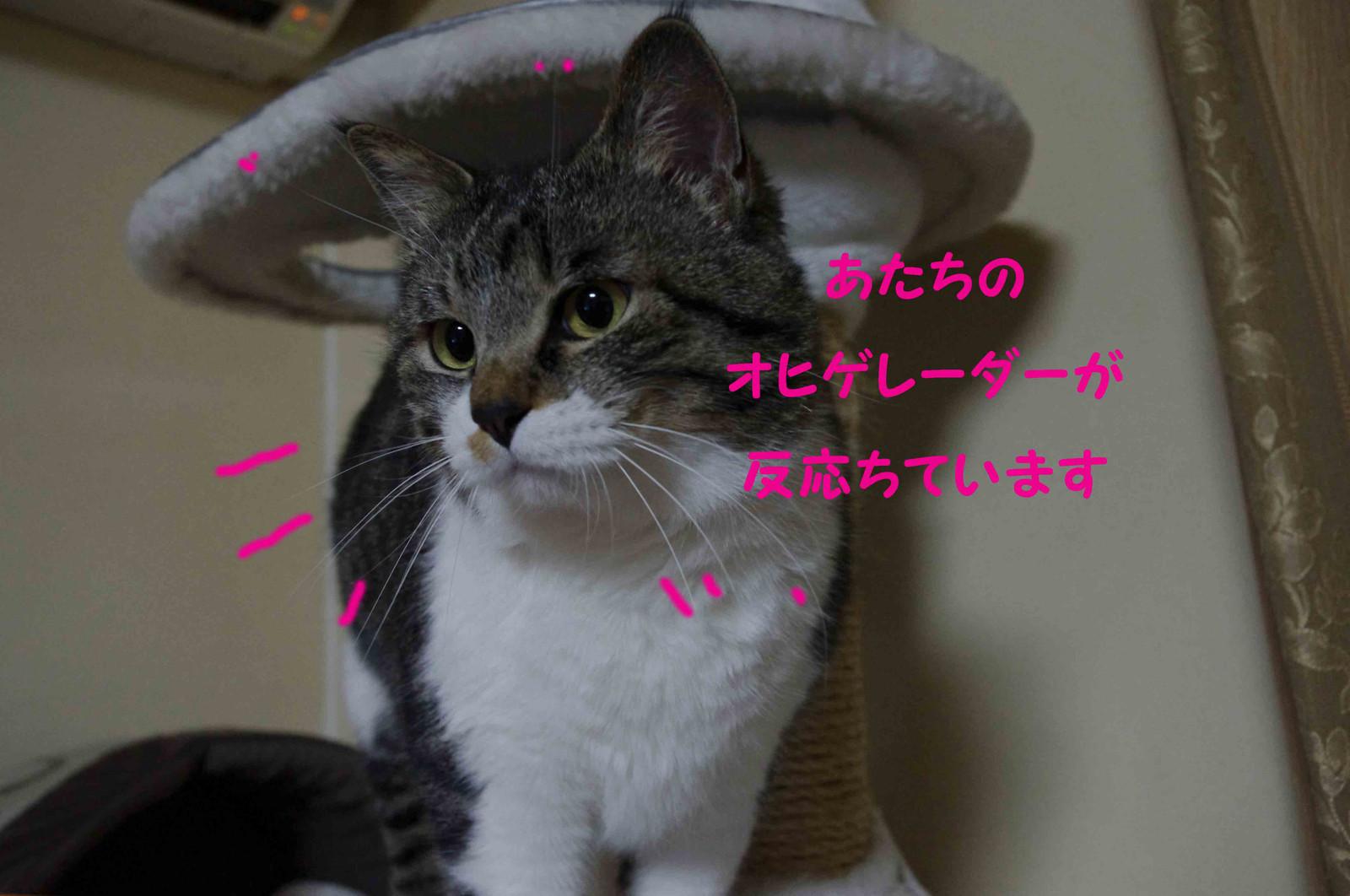 2012_02_18_2264_edited3