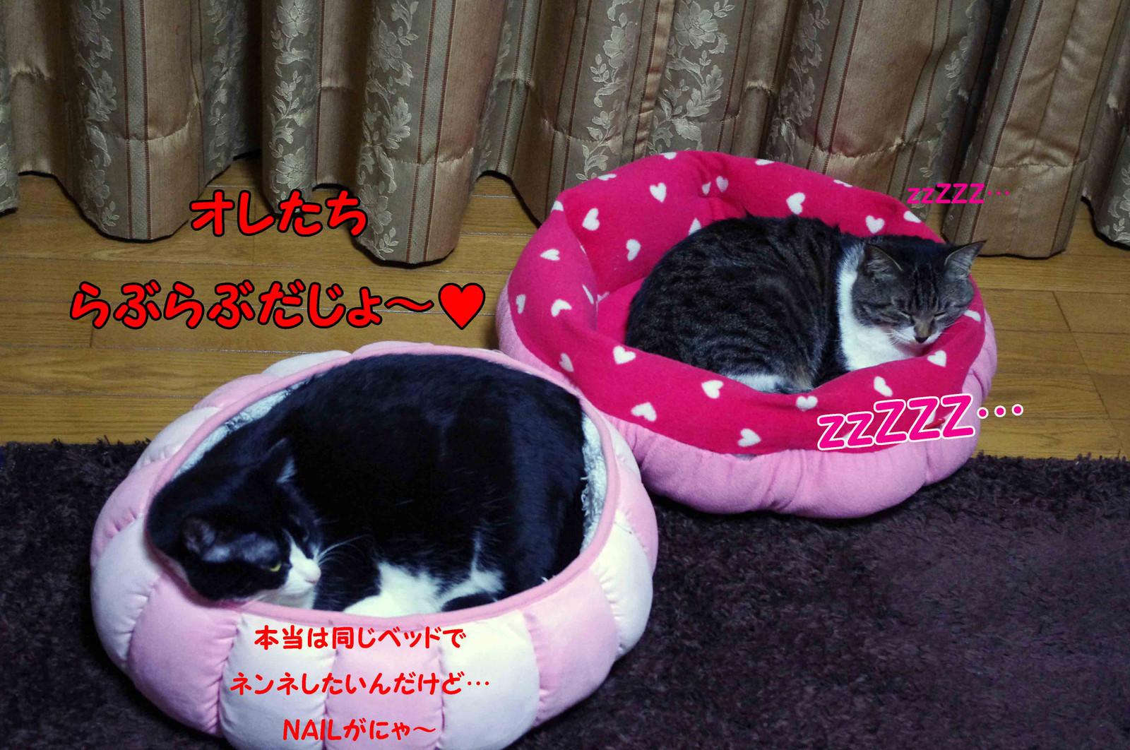 2012_02_24_2370_edited1_3