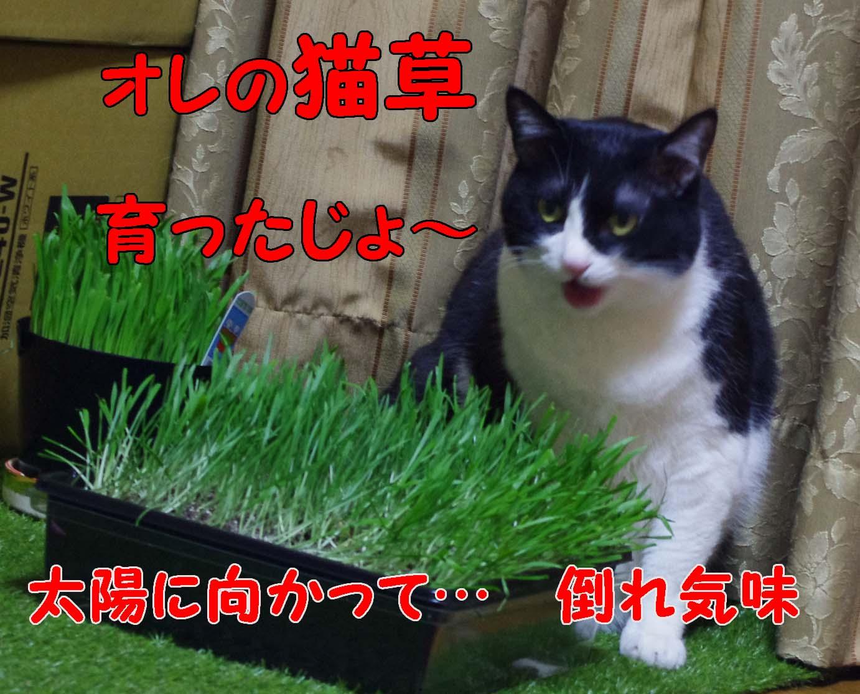 2012_03_01_2499_edited1
