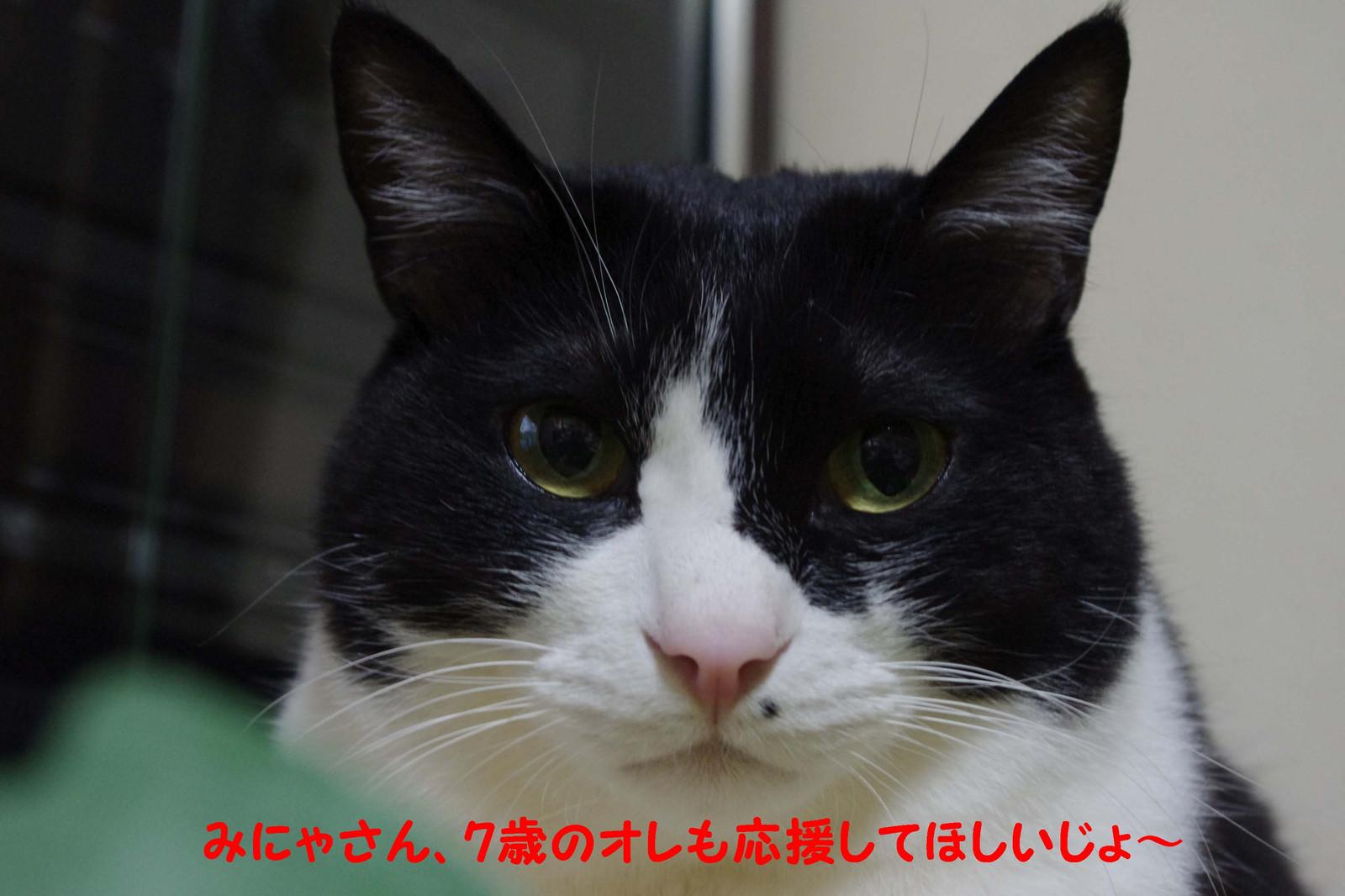 2012_03_17_2878_edited1_2