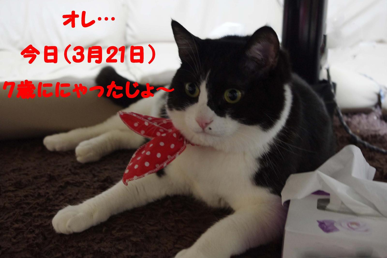 2012_03_21_3094_edited1
