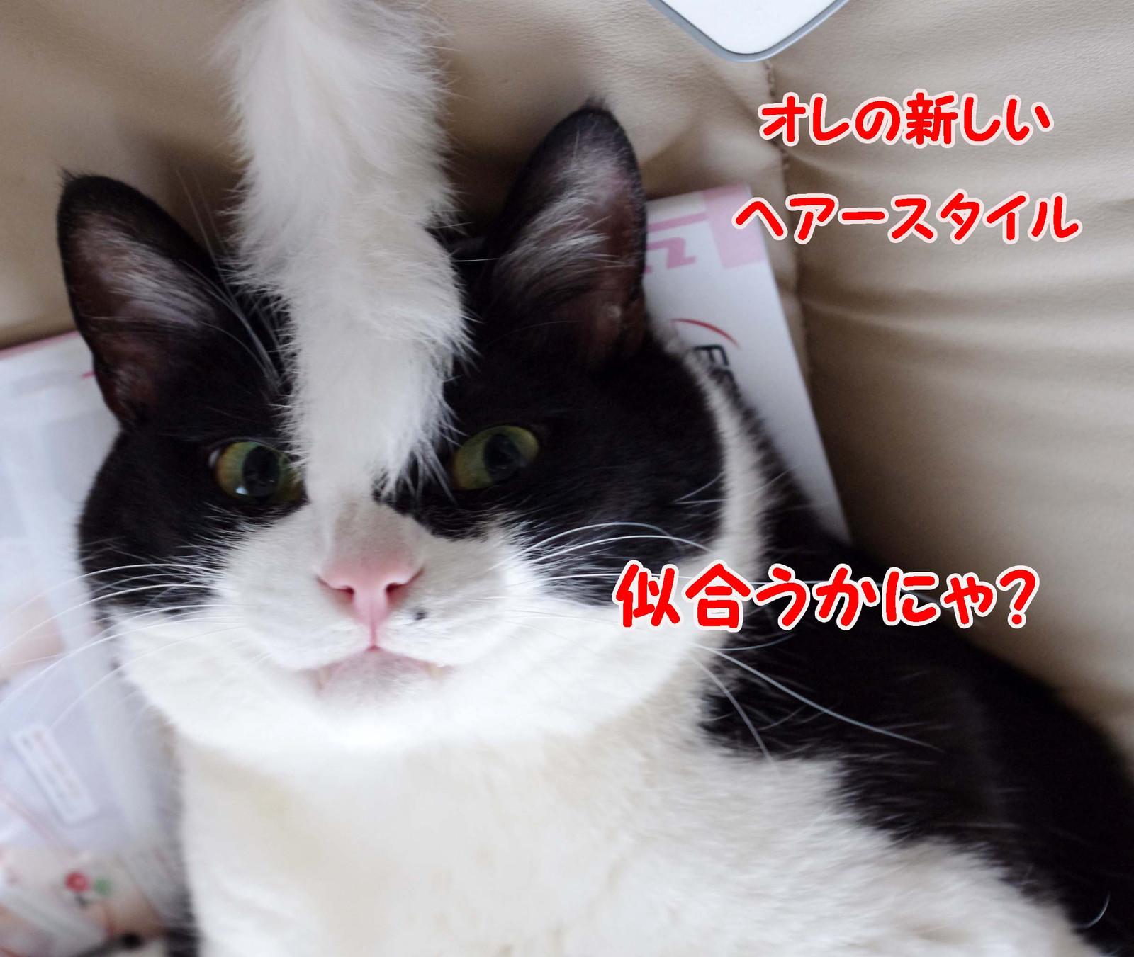 2012_04_05_3576_edited1
