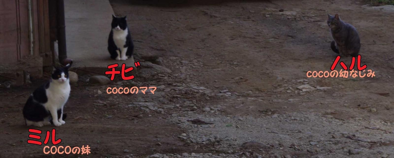 2012_04_15_3867_edited1