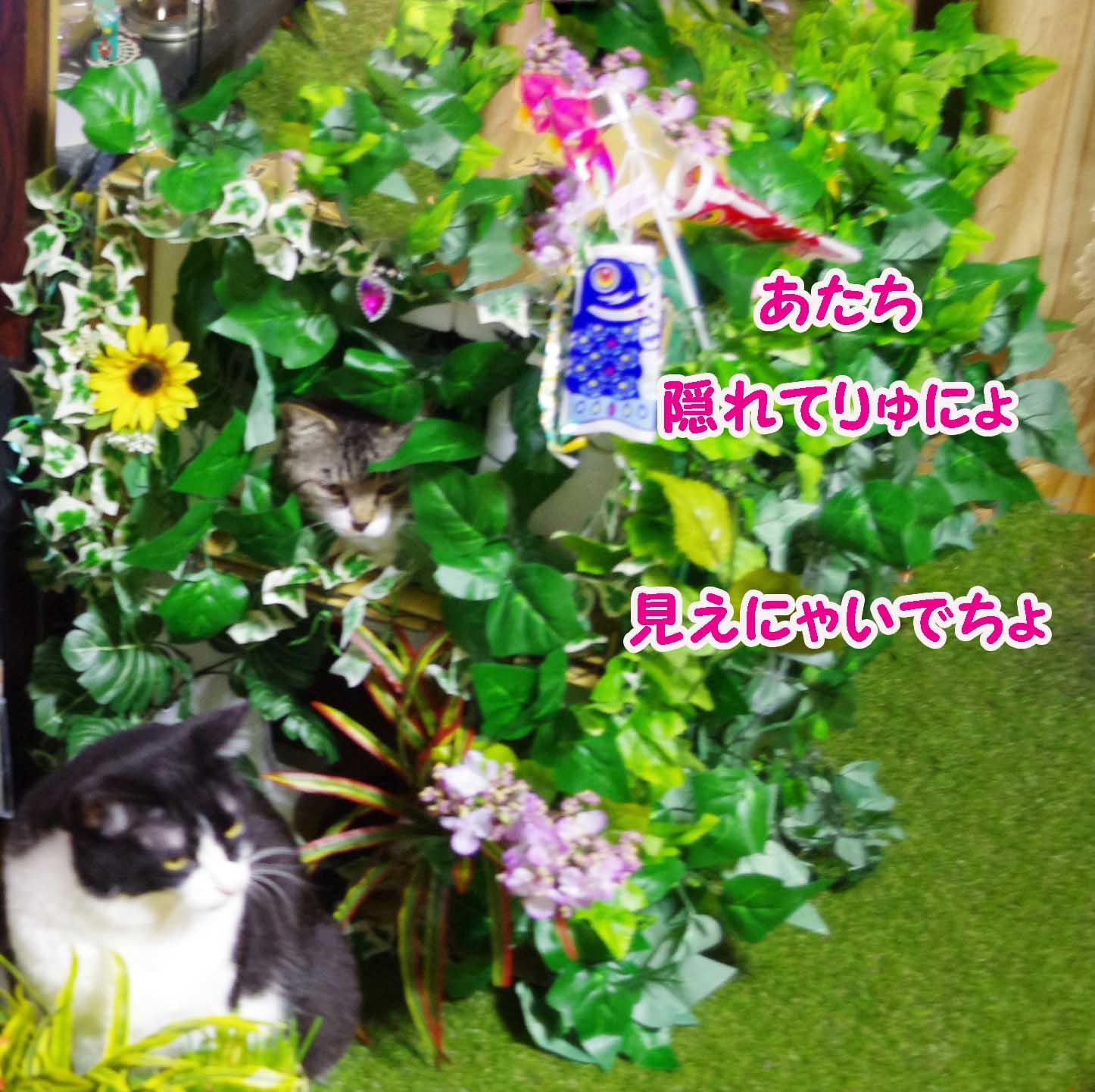 2012_04_22_4005_edited1