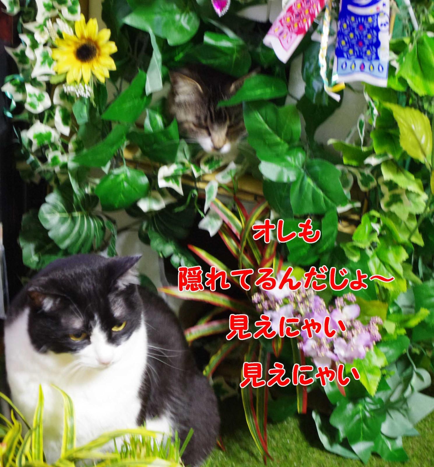 2012_04_22_4007_edited1