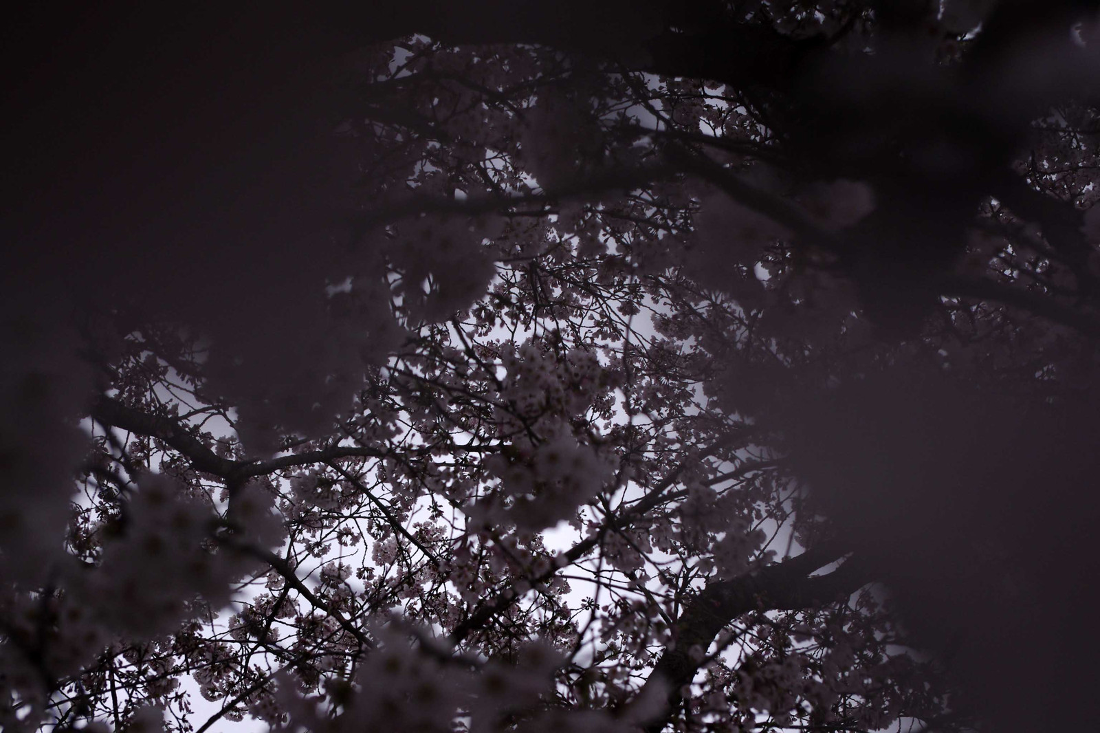 2012_04_22_3993_edited1