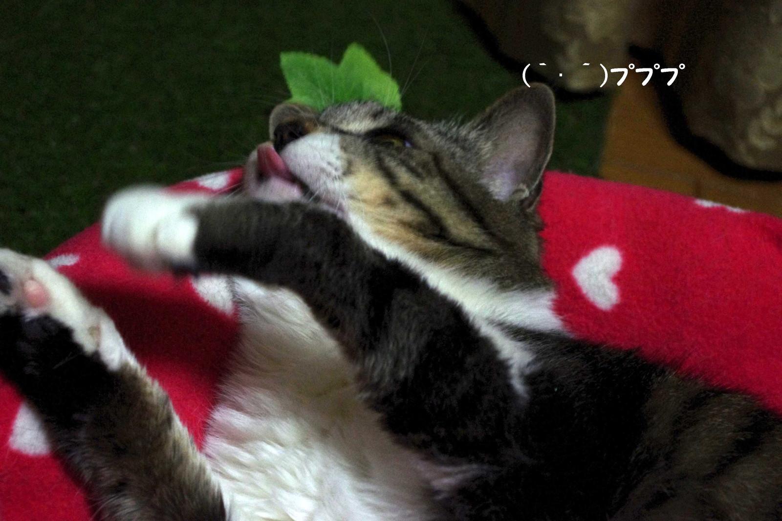 2012_04_24_4050_edited1