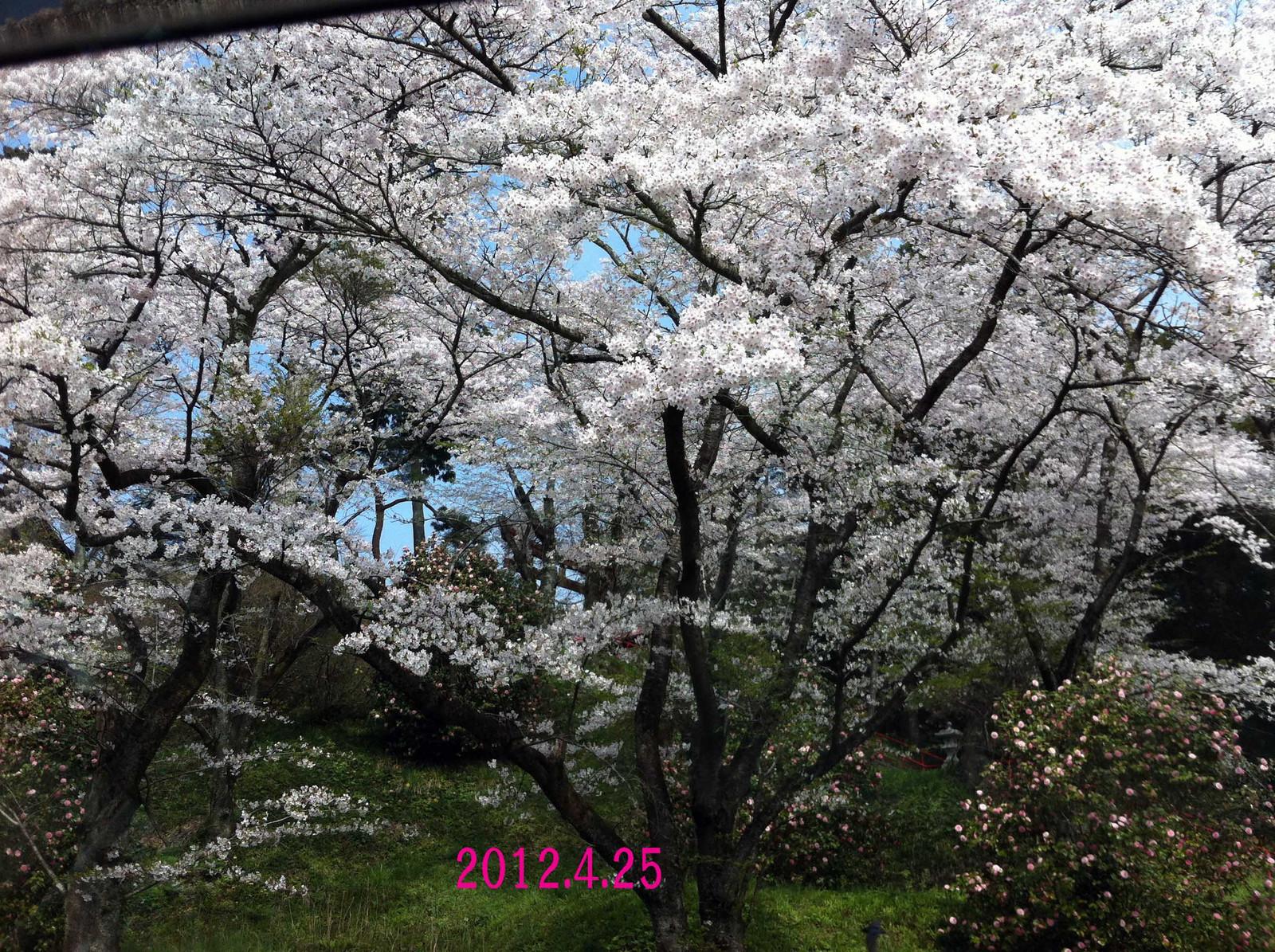 2012_04_25_4051_edited1
