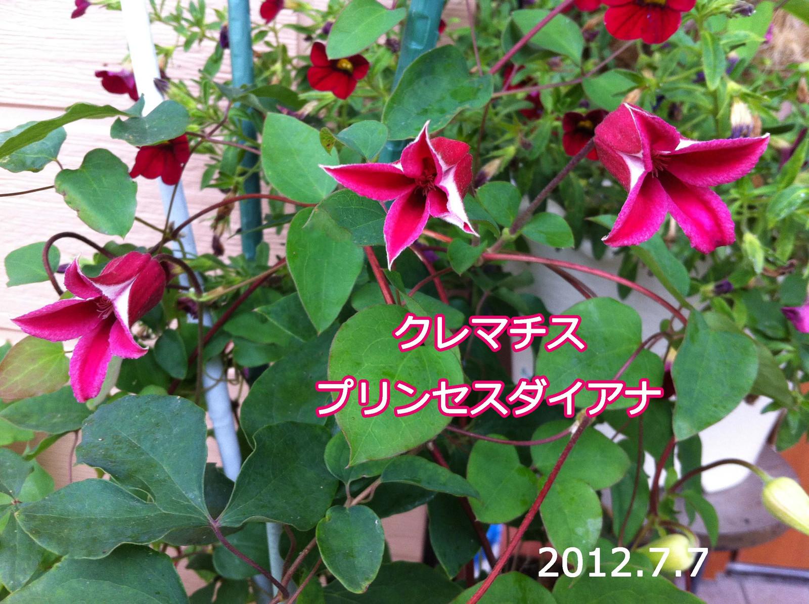 2012_07_07_5940_edited1