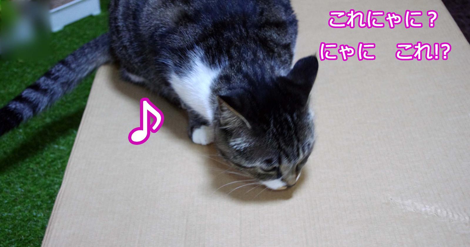 2012_07_08_5956_edited1