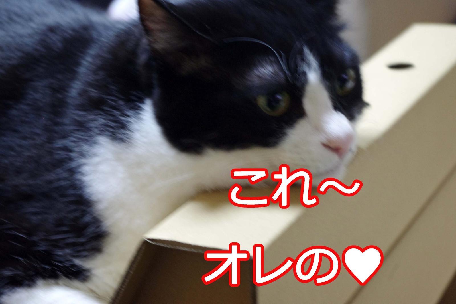 2012_07_08_5999_edited1