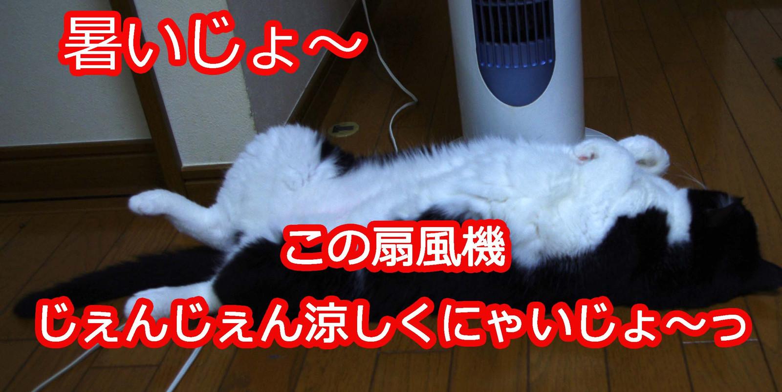 2012_07_27_6537_edited1