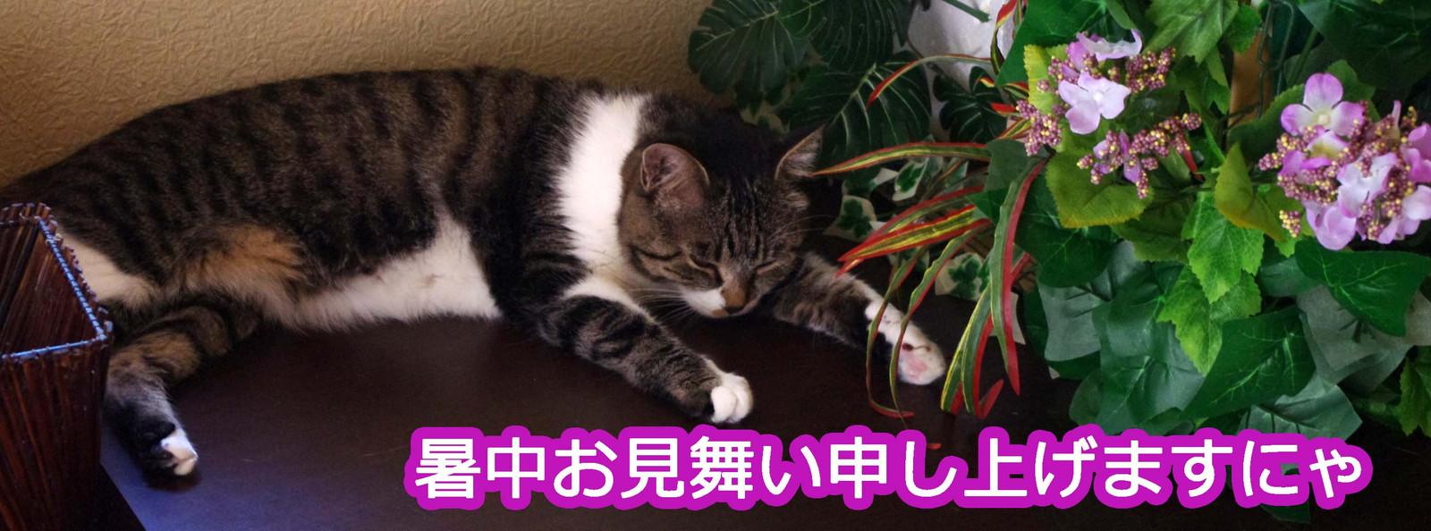 2012_07_28_6590_edited1