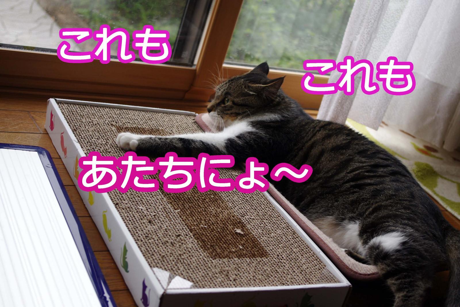 2012_08_03_6773_edited1