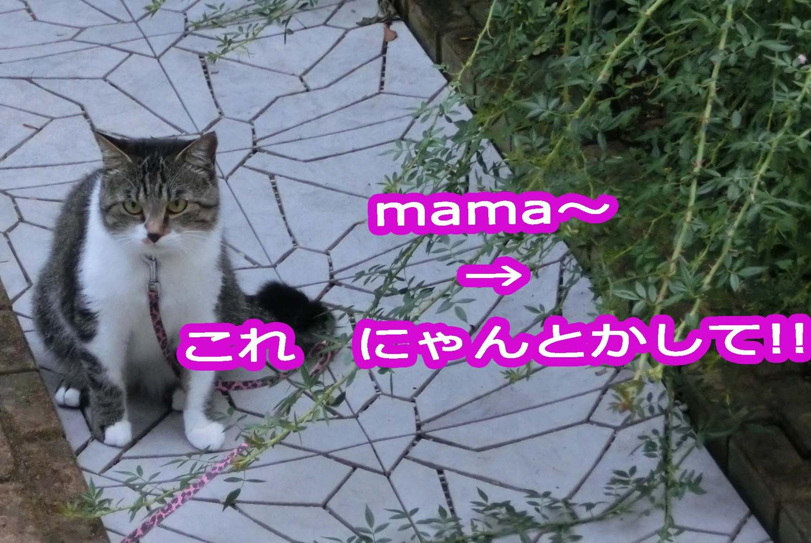 Cimg0726_edited1