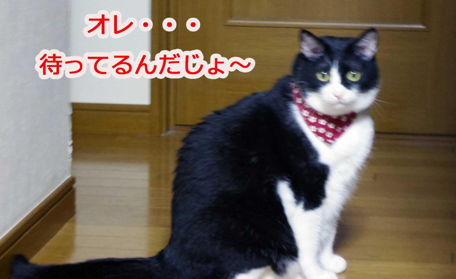 2012_10_08_0362_edited1