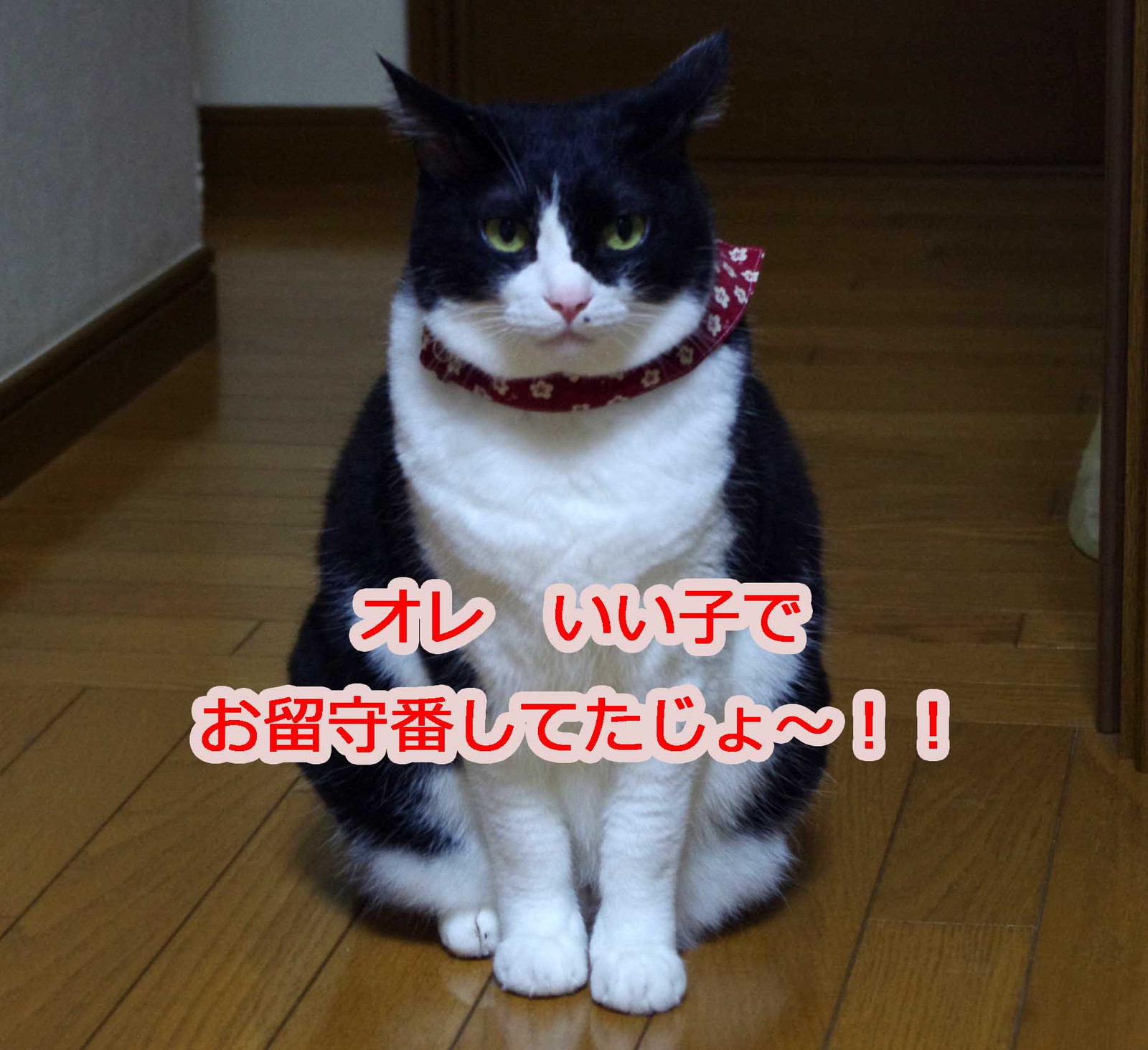2012_10_08_0365_edited1