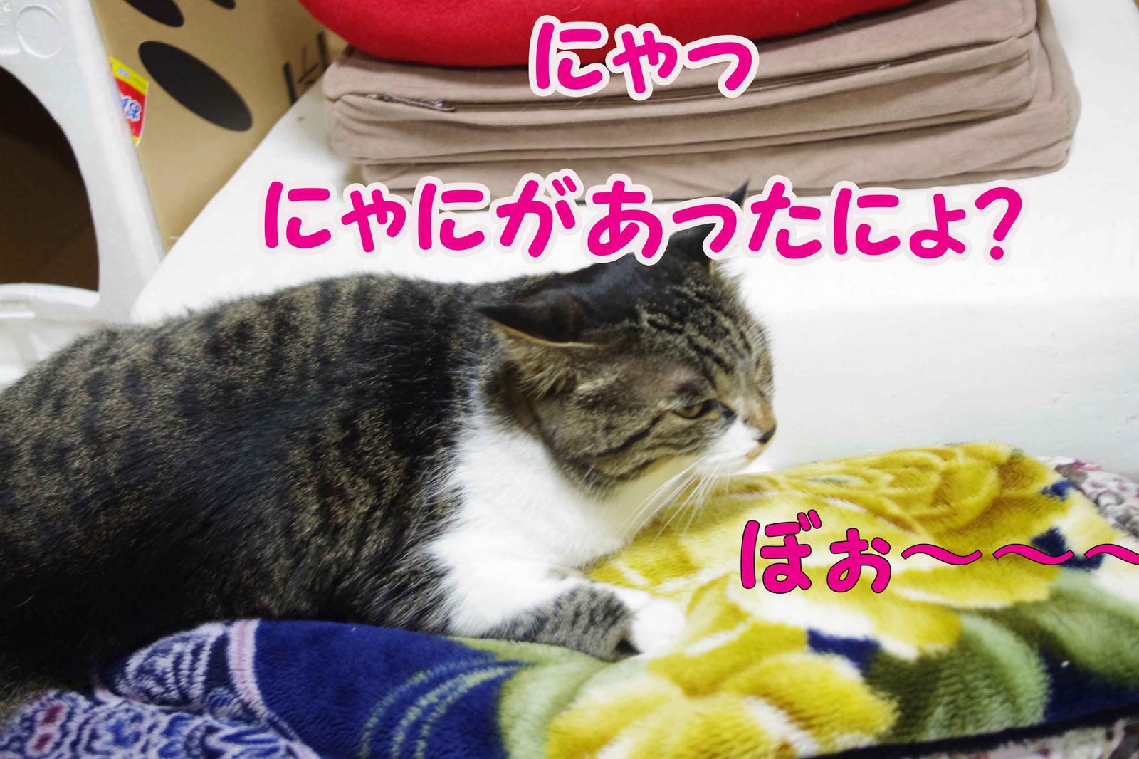 2012_10_23_1195_edited1